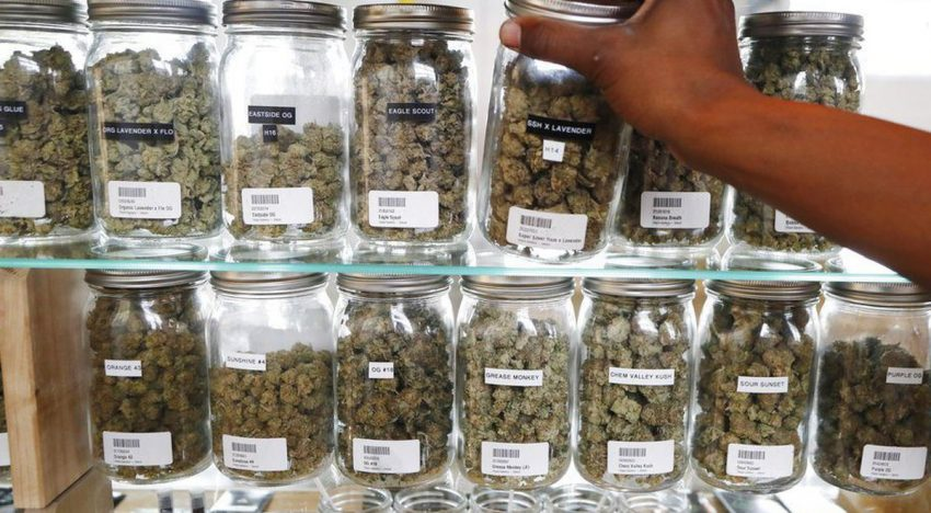 Are You In Search Of The Best Medicinal Marijuana Dispenser? Check It Out Here